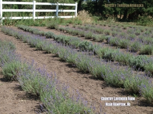 Country Lavender Farm in Hampton NE