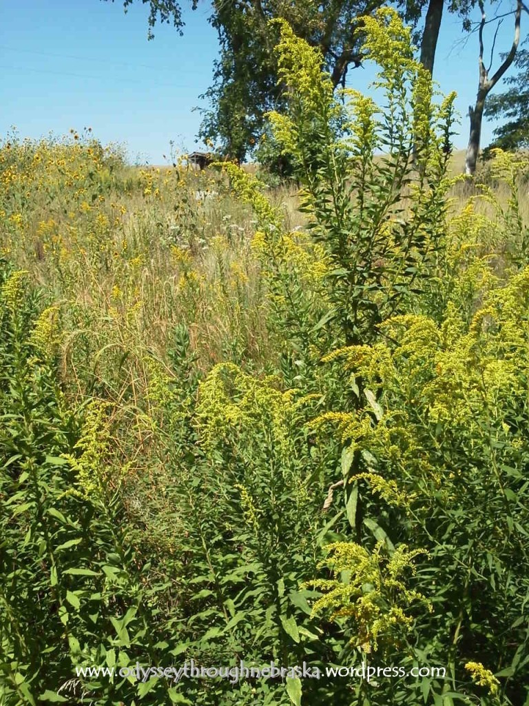 Trees at Spring Creek Prairie