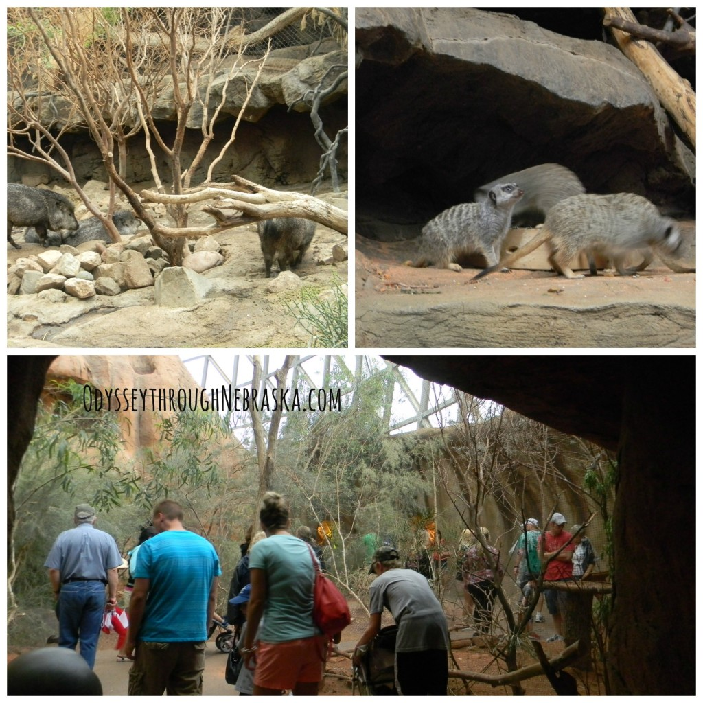 Henry Doorly Zoo Desert Dome Collage