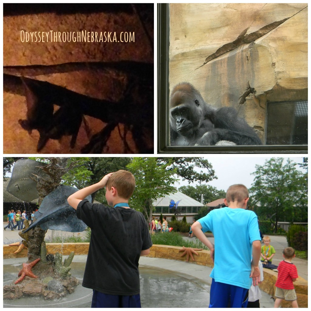 Henry Doorly Zoo V-X