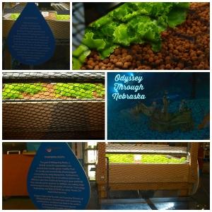 Aquaponics Collage