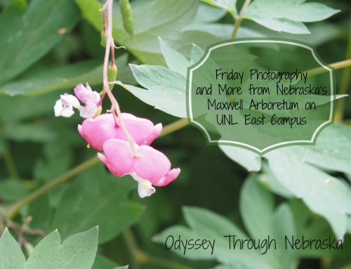 Friday Photography and More Featuring Maxwell Arboretum on UNL East Campus