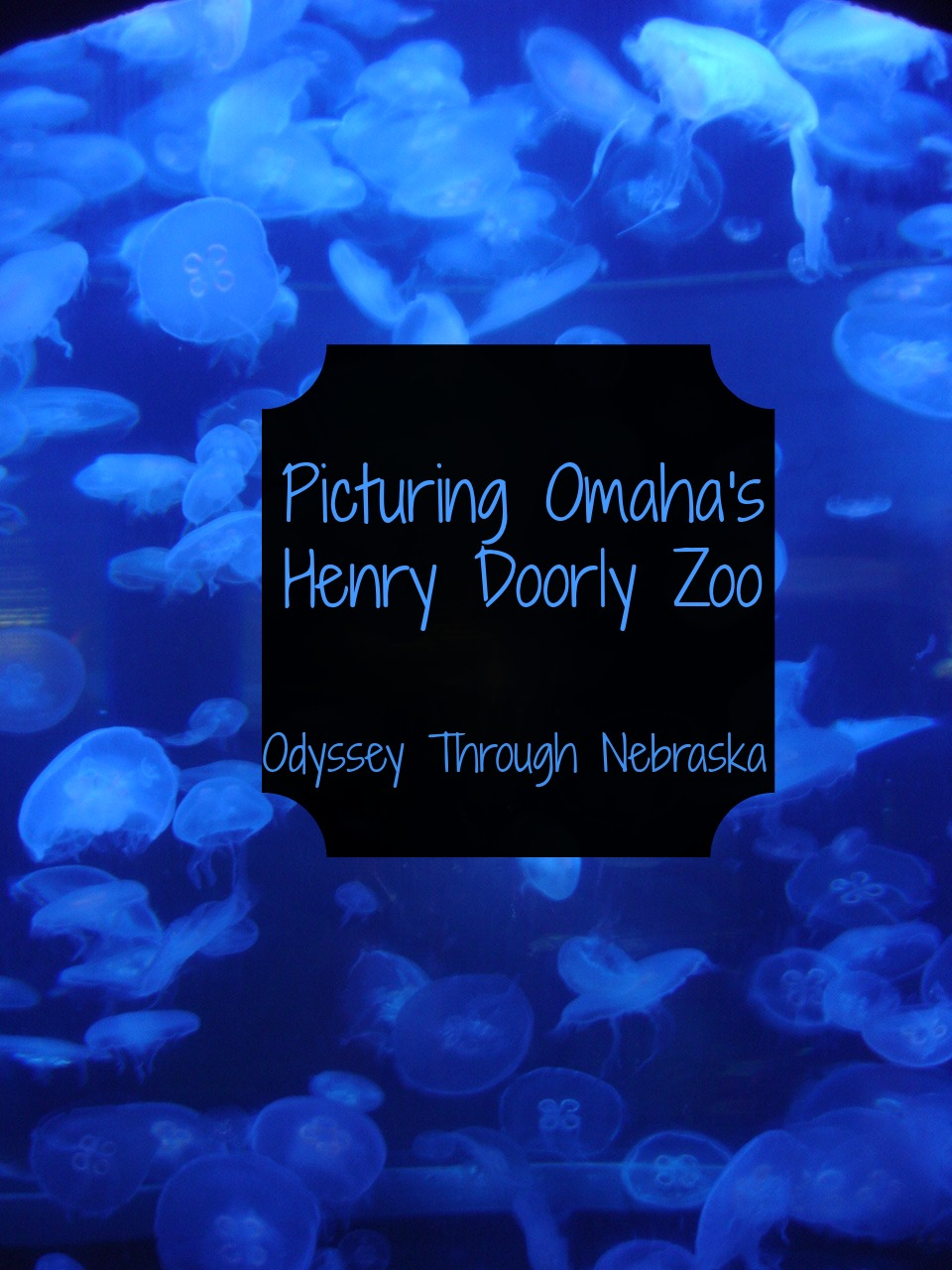 The Omaha Henry Doorly Zoo is one of the best in the world for its variety of animals and more