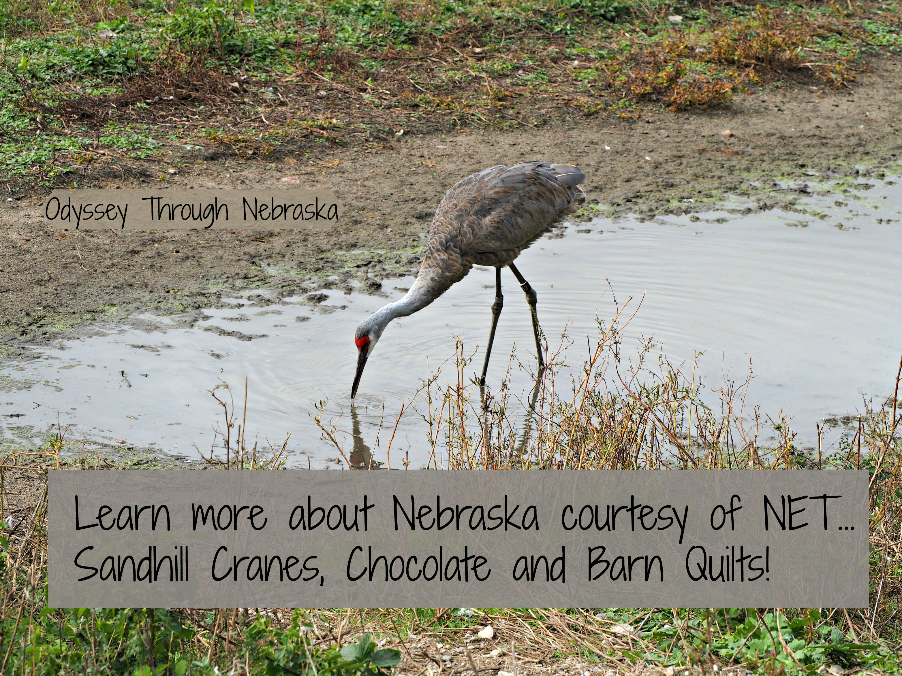 learn about Nebraska